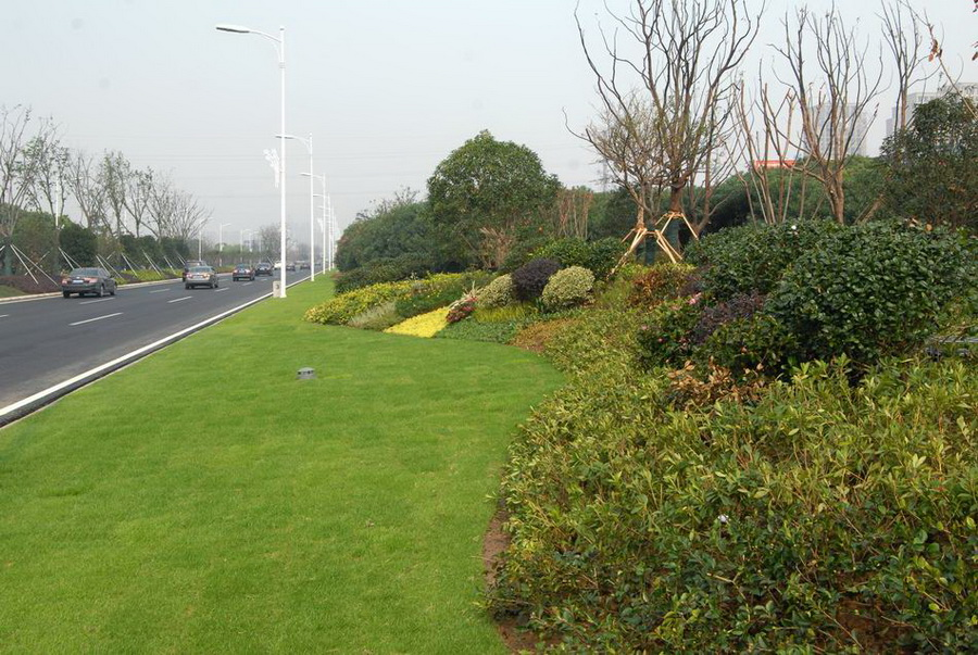 2)优化高密度植物群落